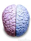 Cerveau-droit-et-gauche-thumb3285913