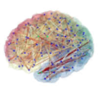 Connectivite-cerebrale